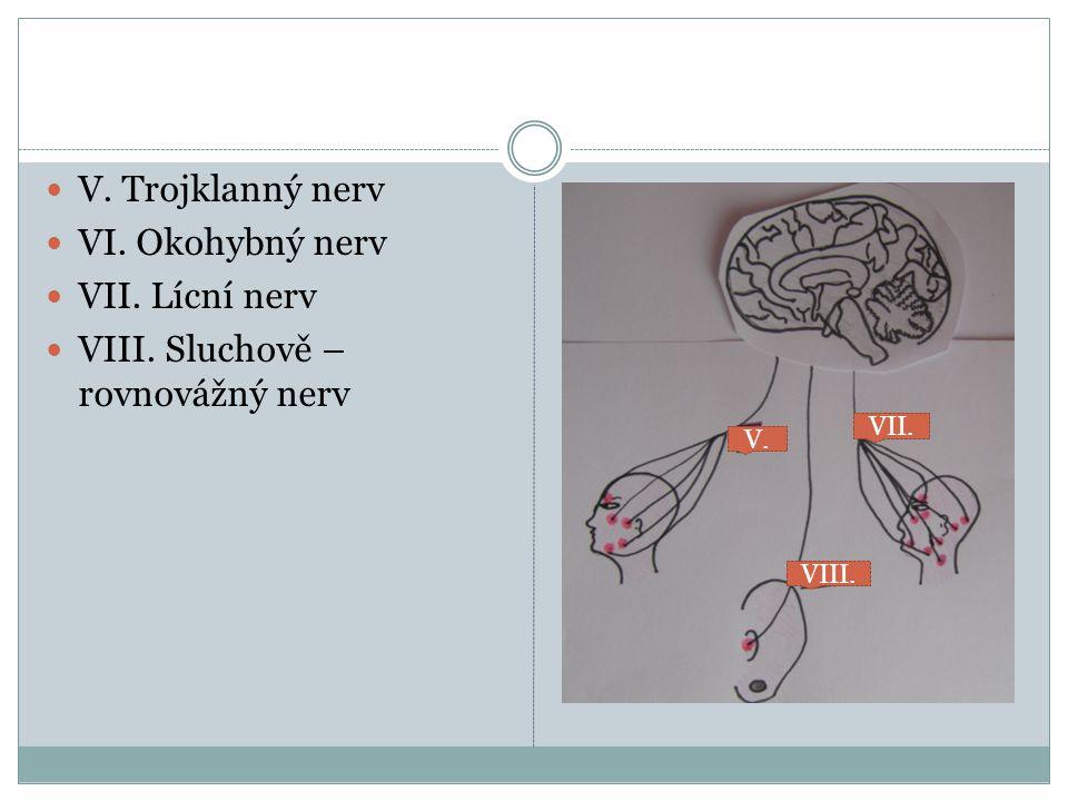 VIII. Sluchově – rovnovážný nerv