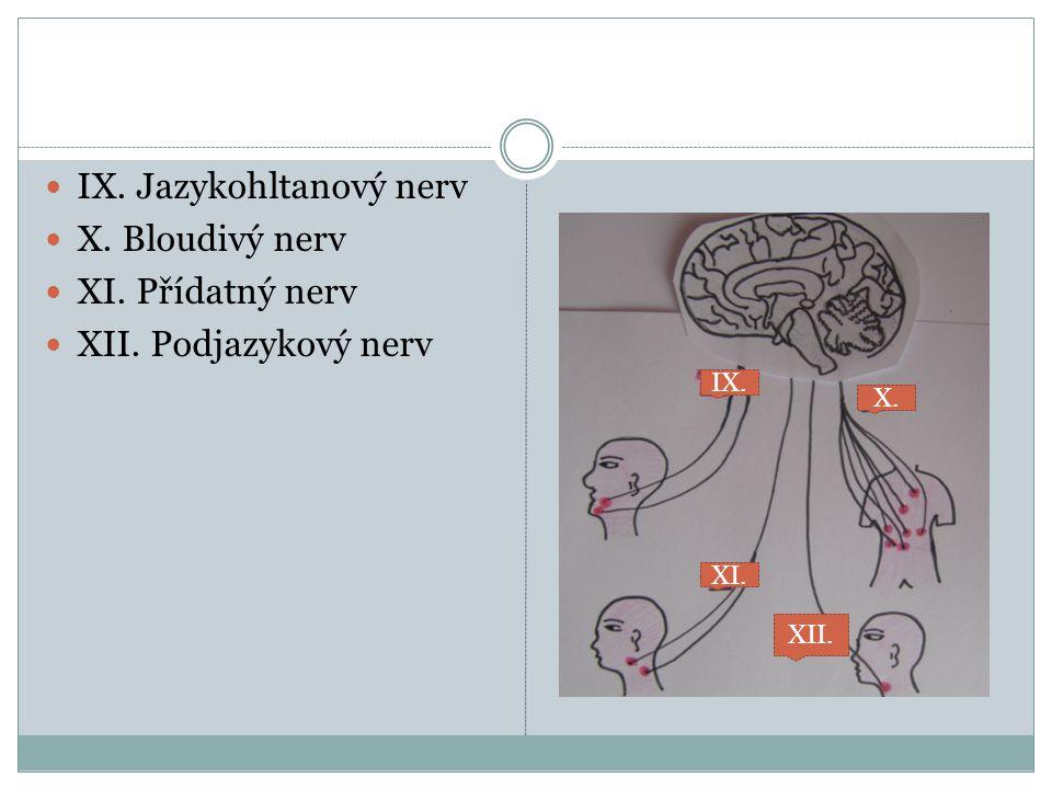 IX. Jazykohltanový nerv X. Bloudivý nerv XI. Přídatný nerv