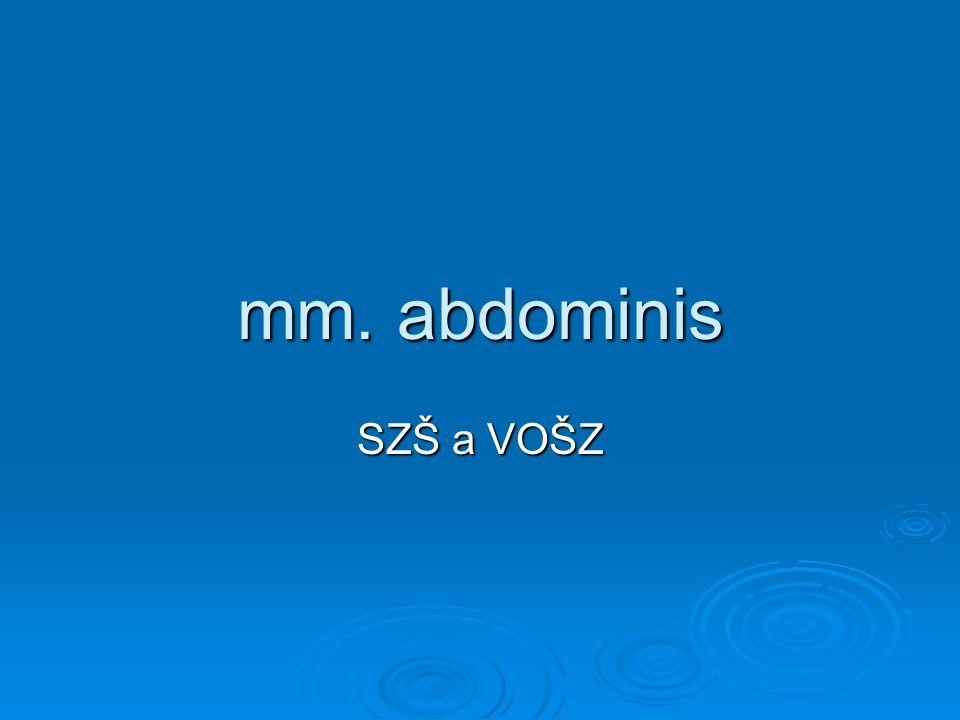 mm. abdominis SZŠ a VOŠZ
