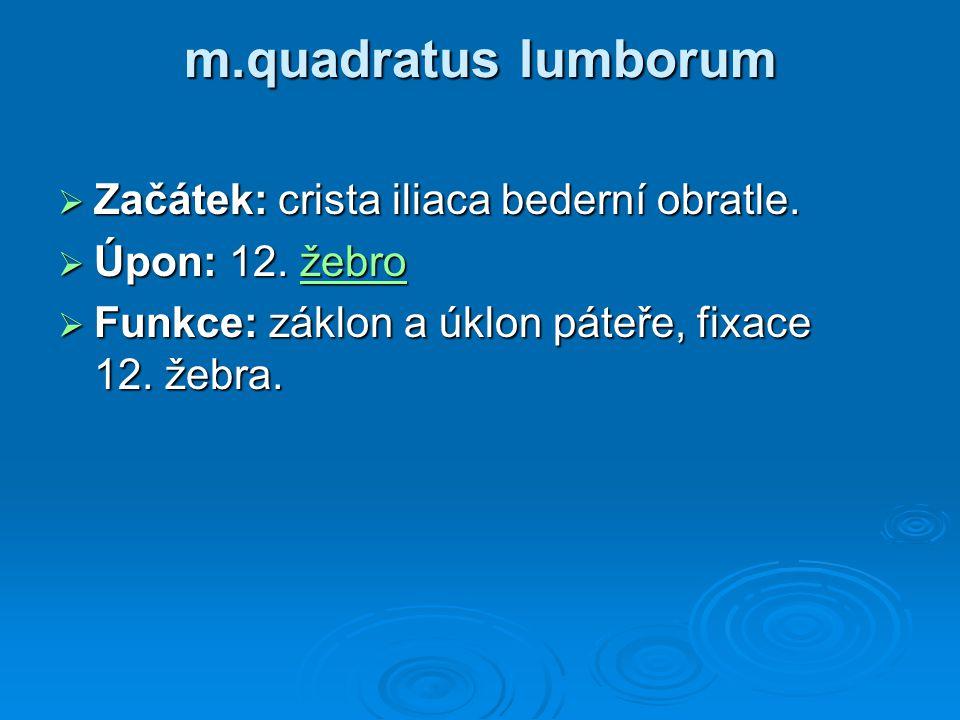 m.quadratus lumborum Začátek: crista iliaca bederní obratle.
