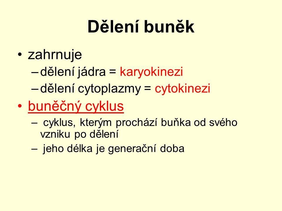 Dělení buněk zahrnuje buněčný cyklus dělení jádra = karyokinezi