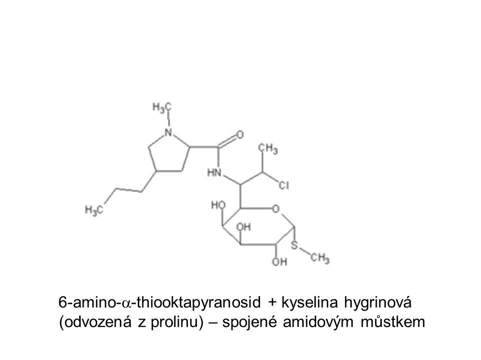 6-amino-a-thiooktapyranosid + kyselina hygrinová (odvozená z prolinu) – spojené amidovým můstkem