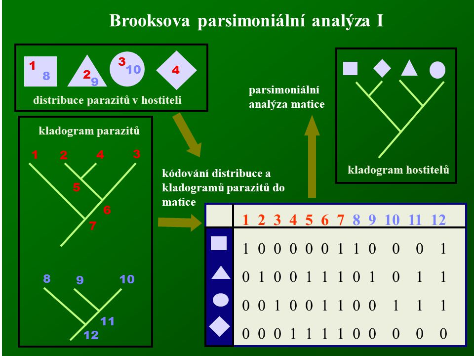 Brooksova parsimoniální analýza I