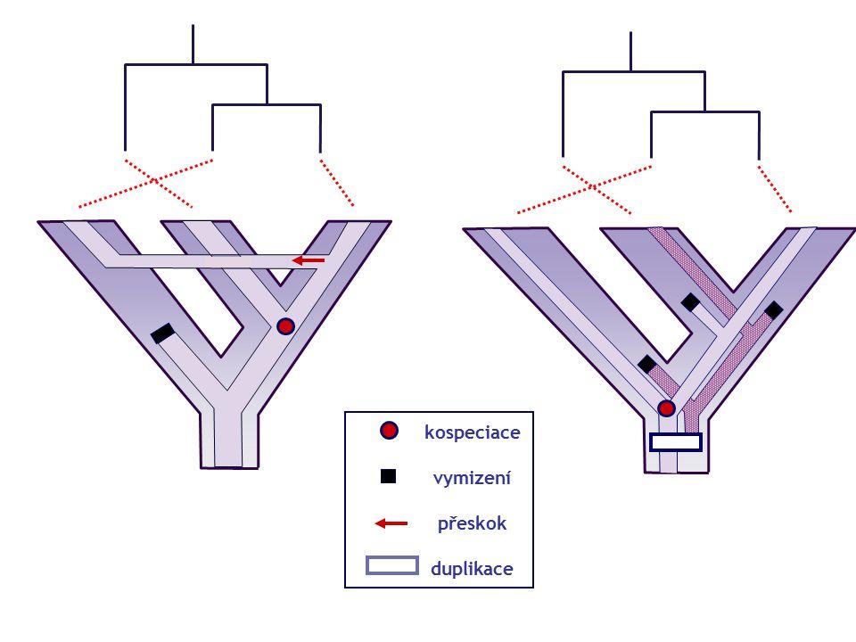 kospeciace vymizení přeskok duplikace