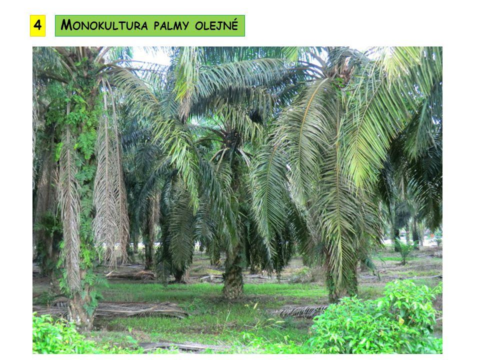 Monokultura palmy olejné