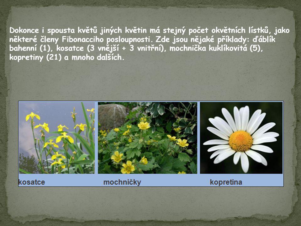 Dokonce i spousta květů jiných květin má stejný počet okvětních lístků, jako některé členy Fibonacciho posloupnosti.