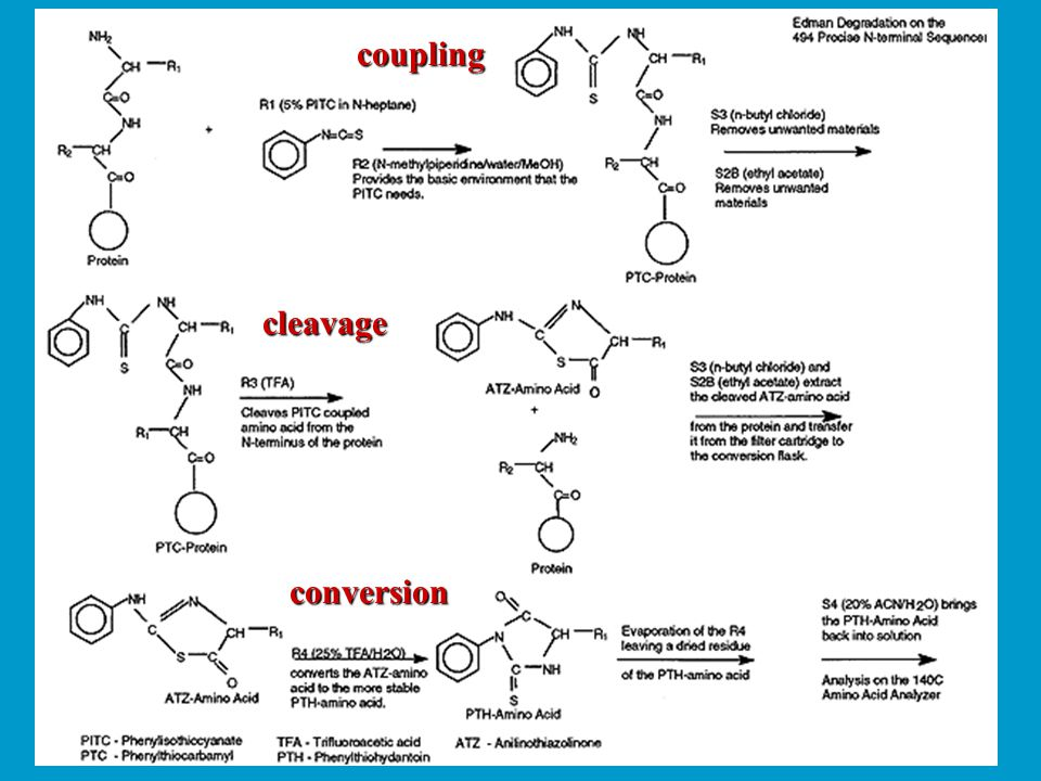 coupling cleavage conversion
