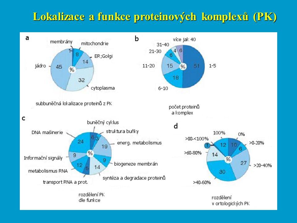 Lokalizace a funkce proteinových komplexů (PK)