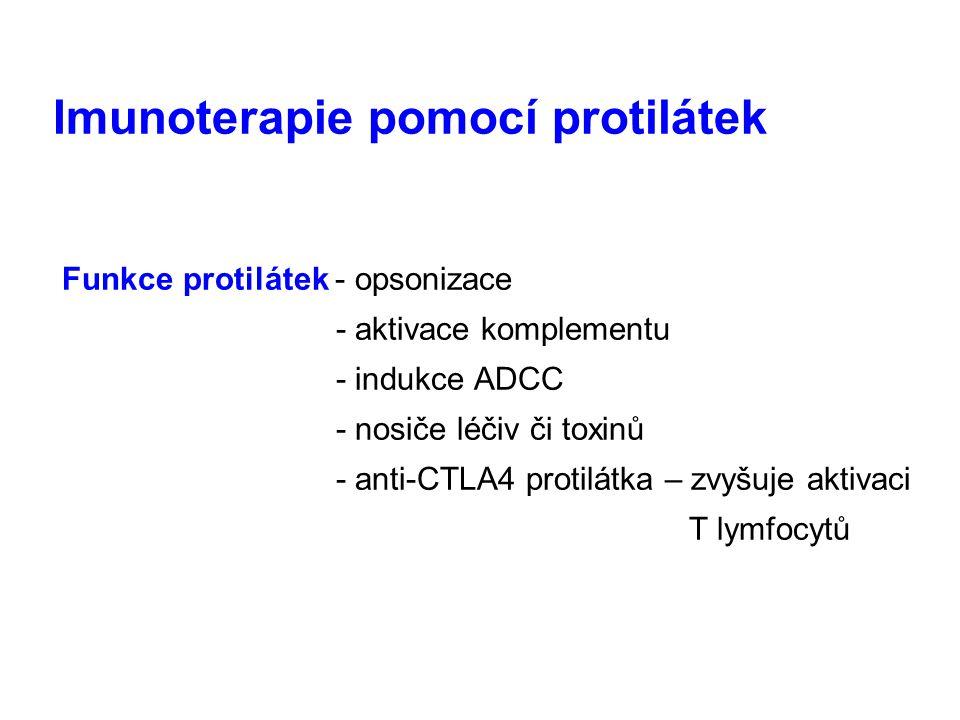Imunoterapie pomocí protilátek Funkce protilátek - opsonizace - aktivace komplementu - indukce ADCC - nosiče léčiv či toxinů - anti-CTLA4 protilátka – zvyšuje aktivaci T lymfocytů