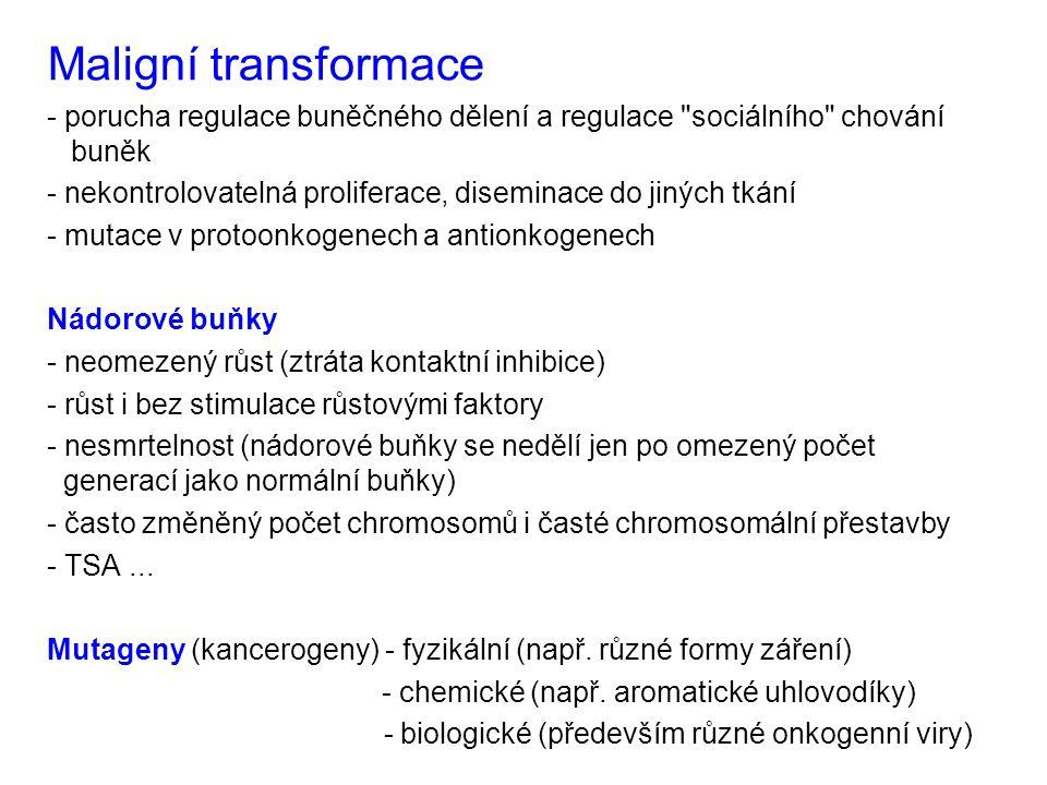 Maligní transformace - porucha regulace buněčného dělení a regulace sociálního chování buněk.