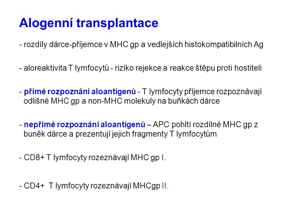 Alogenní transplantace - rozdíly dárce-příjemce v MHC gp a vedlejších histokompatibilních Ag - aloreaktivita T lymfocytů - riziko rejekce a reakce štěpu proti hostiteli - přímé rozpoznání aloantigenů - T lymfocyty příjemce rozpoznávají odlišné MHC gp a non-MHC molekuly na buňkách dárce - nepřímé rozpoznání aloantigenů – APC pohltí rozdílné MHC gp z buněk dárce a prezentují jejich fragmenty T lymfocytům - CD8+ T lymfocyty rozeznávají MHC gp I.