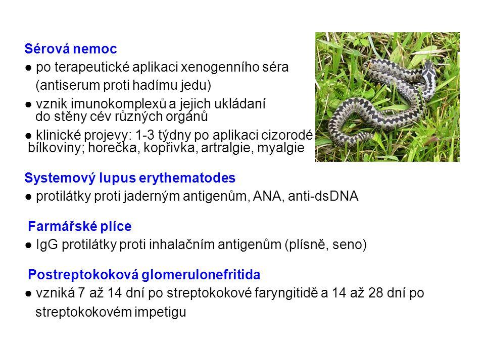 Sérová nemoc ● po terapeutické aplikaci xenogenního séra. (antiserum proti hadímu jedu)
