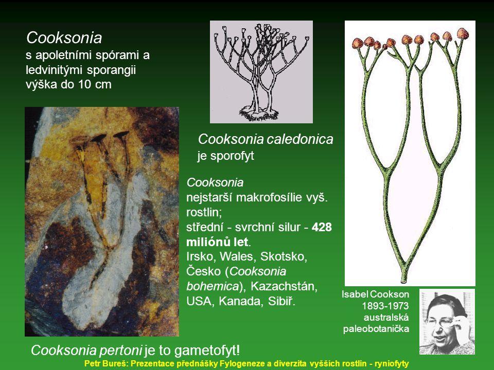 Cooksonia Cooksonia caledonica je sporofyt