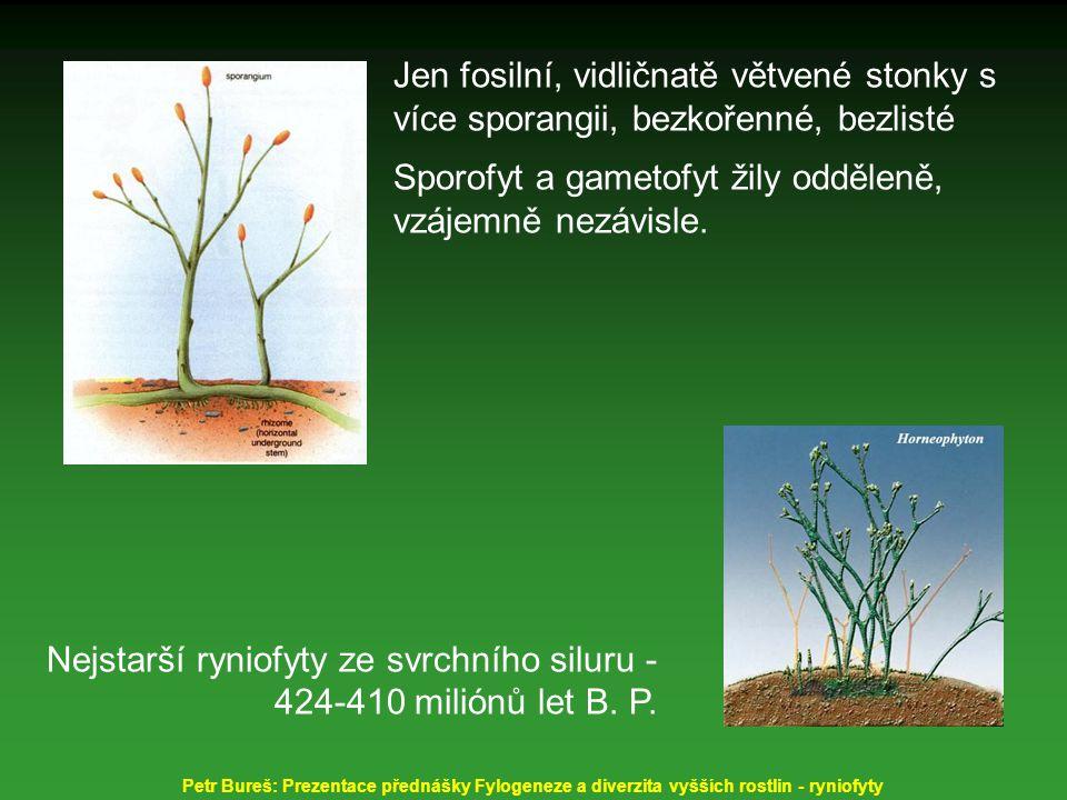 Sporofyt a gametofyt žily odděleně, vzájemně nezávisle.