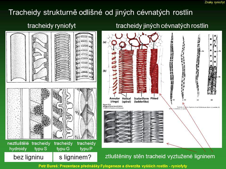 Tracheidy strukturně odlišné od jiných cévnatých rostlin