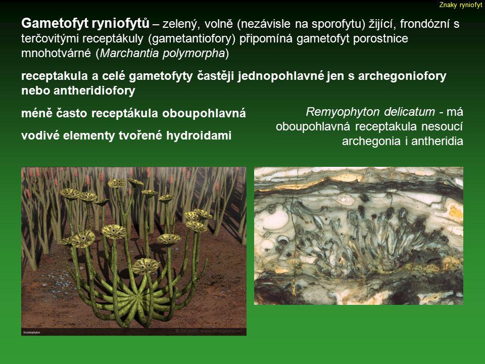 Znaky ryniofyt