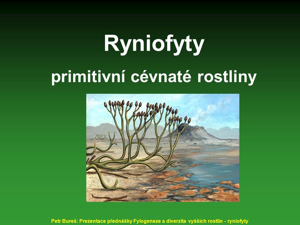 primitivní cévnaté rostliny