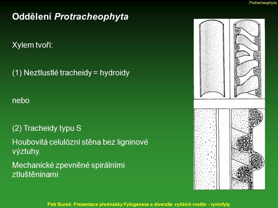 Oddělení Protracheophyta