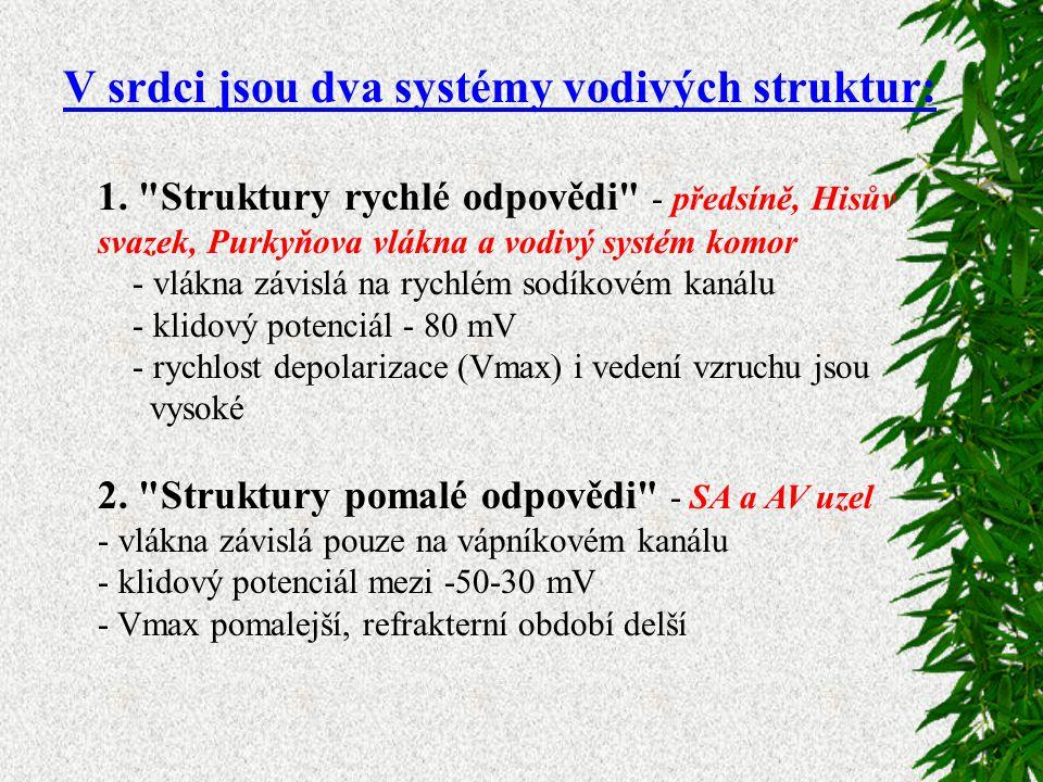 V srdci jsou dva systémy vodivých struktur: