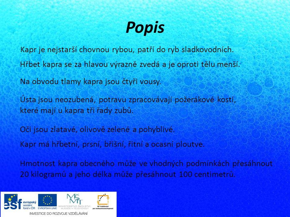 Popis Kapr je nejstarší chovnou rybou, patří do ryb sladkovodních.