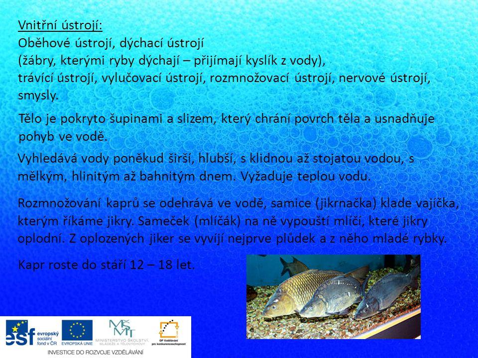 Vnitřní ústrojí: Oběhové ústrojí, dýchací ústrojí. (žábry, kterými ryby dýchají – přijímají kyslík z vody),