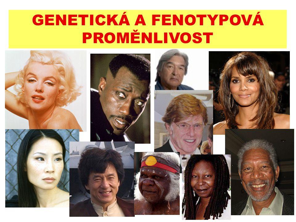 GENETICKÁ A FENOTYPOVÁ