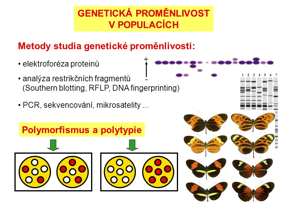 GENETICKÁ PROMĚNLIVOST