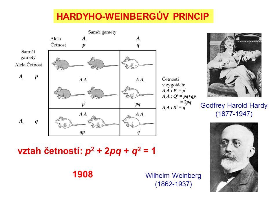 HARDYHO-WEINBERGŮV PRINCIP
