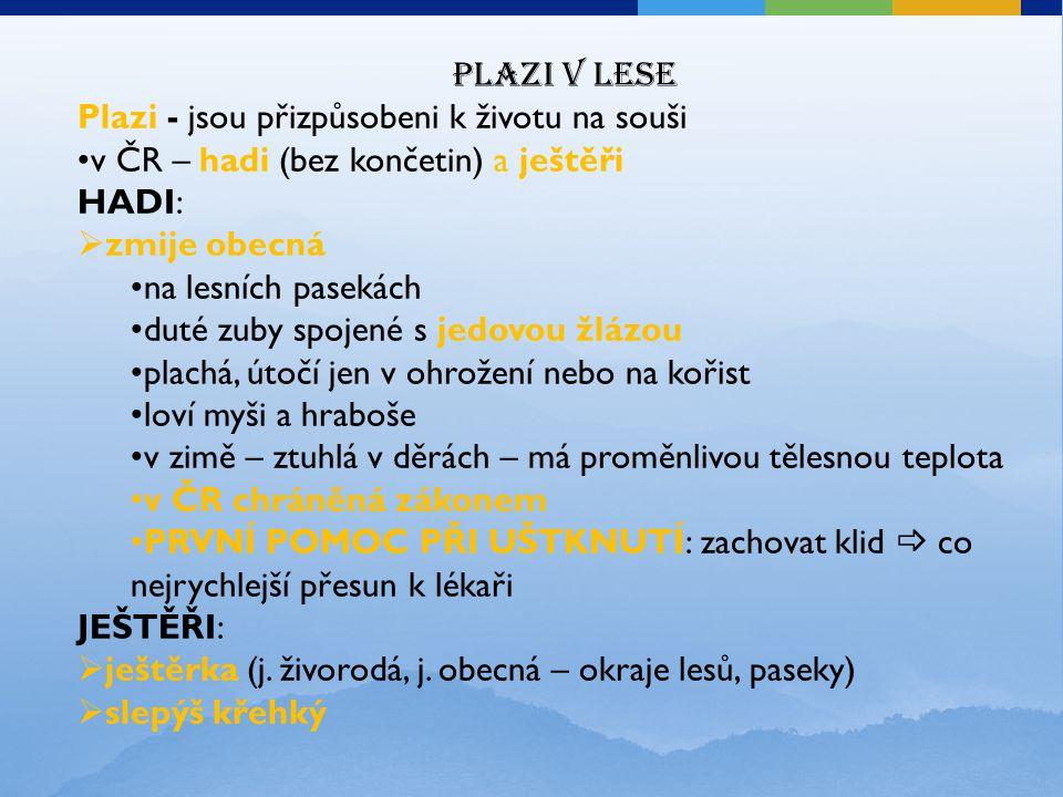 Plazi v lese Plazi - jsou přizpůsobeni k životu na souši. v ČR – hadi (bez končetin) a ještěři. HADI: