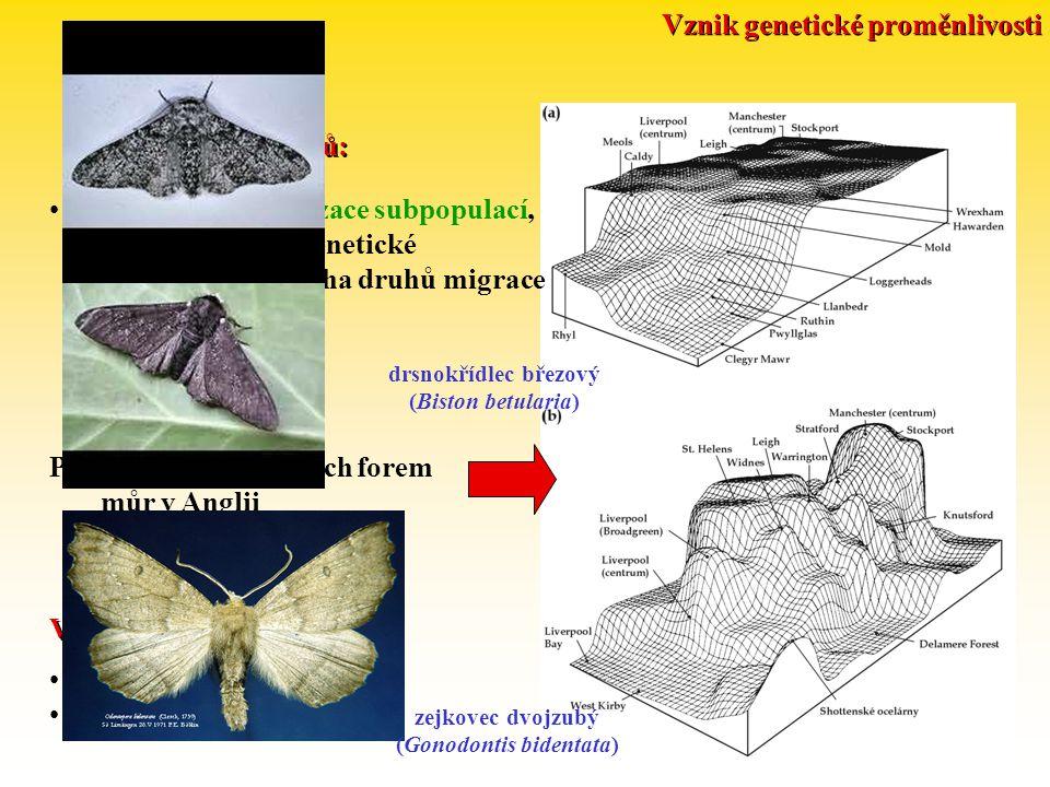Vznik genetické proměnlivosti (Gonodontis bidentata)