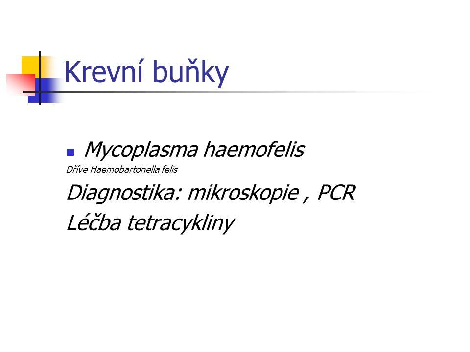 Krevní buňky Mycoplasma haemofelis Diagnostika: mikroskopie , PCR