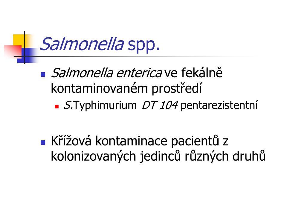 Salmonella spp. Salmonella enterica ve fekálně kontaminovaném prostředí. S.Typhimurium DT 104 pentarezistentní.