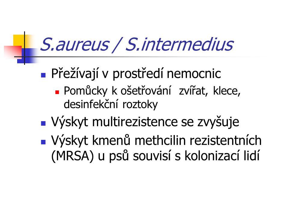 S.aureus / S.intermedius