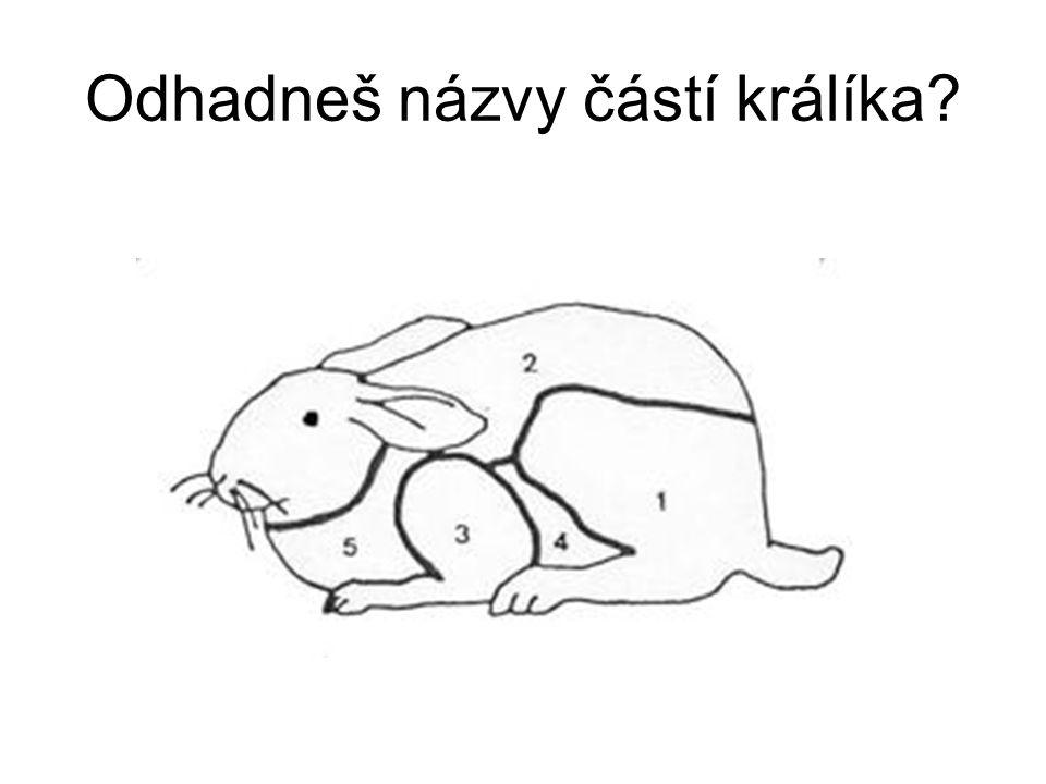 Odhadneš názvy částí králíka