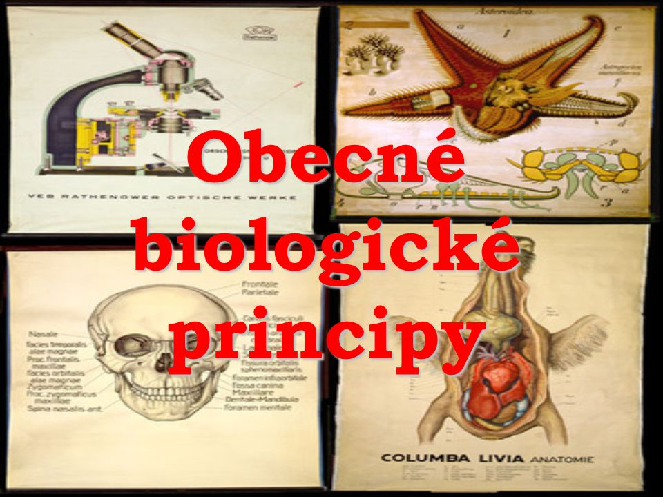 Obecné biologické principy