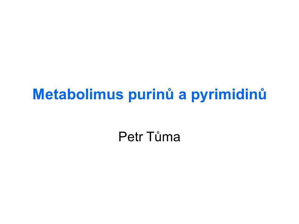Metabolimus purinů a pyrimidinů