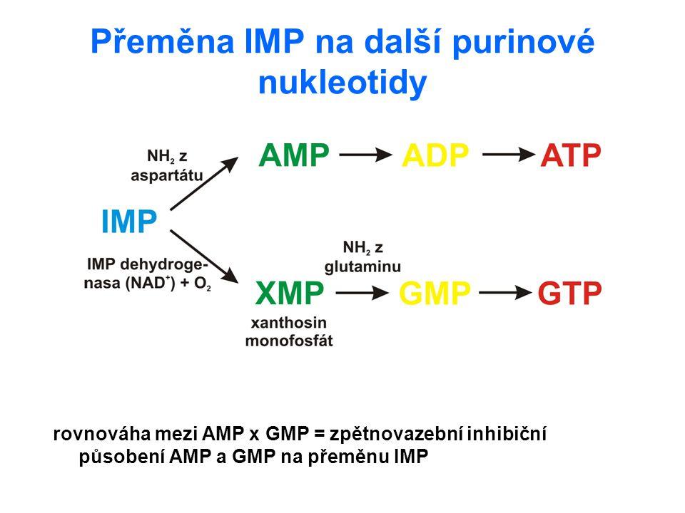 Přeměna IMP na další purinové nukleotidy