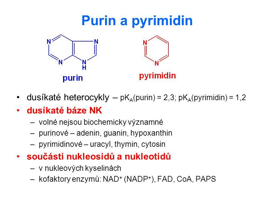 Purin a pyrimidin dusíkaté heterocykly – pKA(purin) = 2,3; pKA(pyrimidin) = 1,2. dusíkaté báze NK.