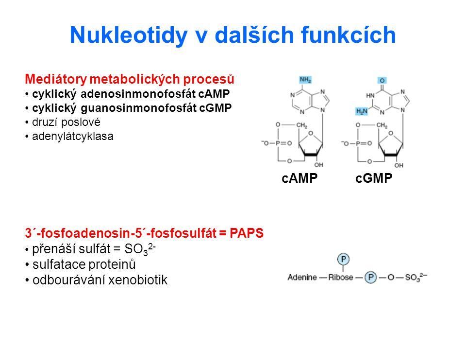 Nukleotidy v dalších funkcích