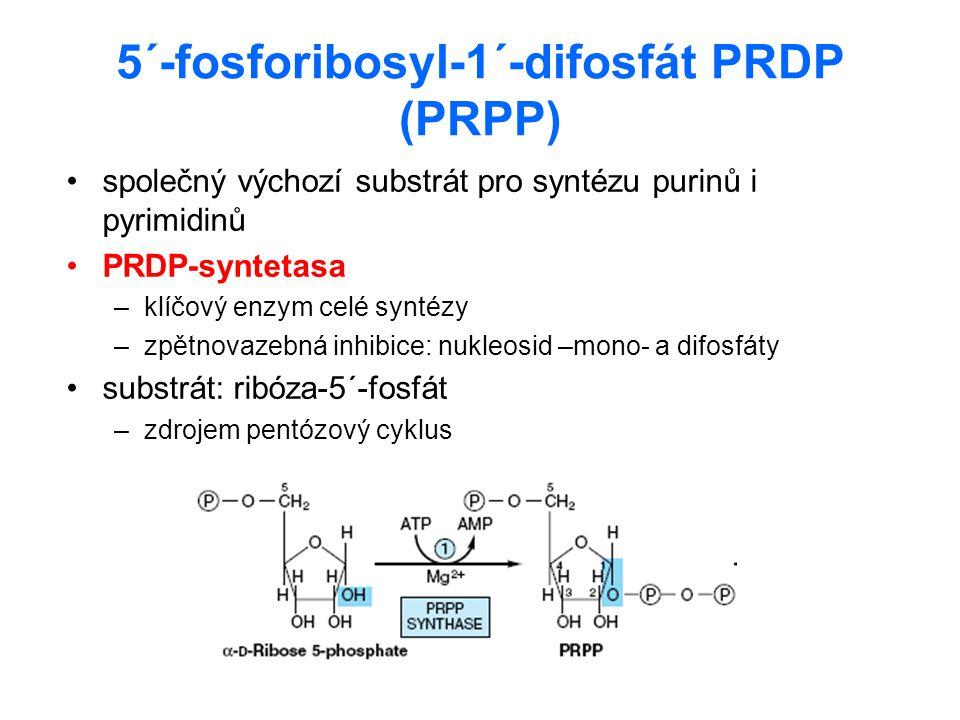 5´-fosforibosyl-1´-difosfát PRDP (PRPP)