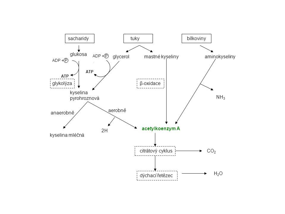 kyselina pyrohroznová NH3