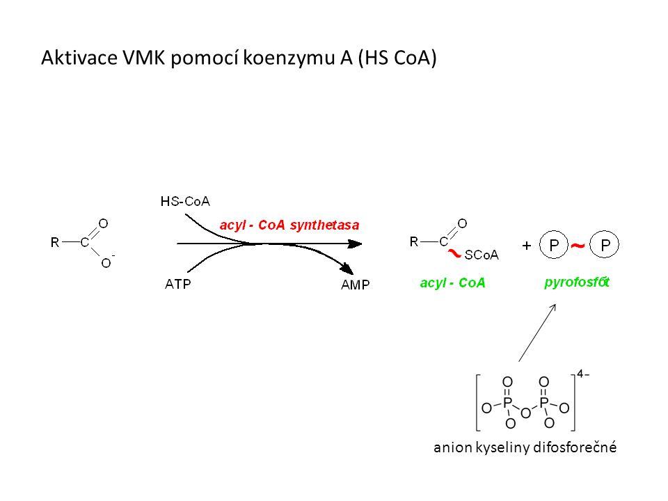 Aktivace VMK pomocí koenzymu A (HS CoA)