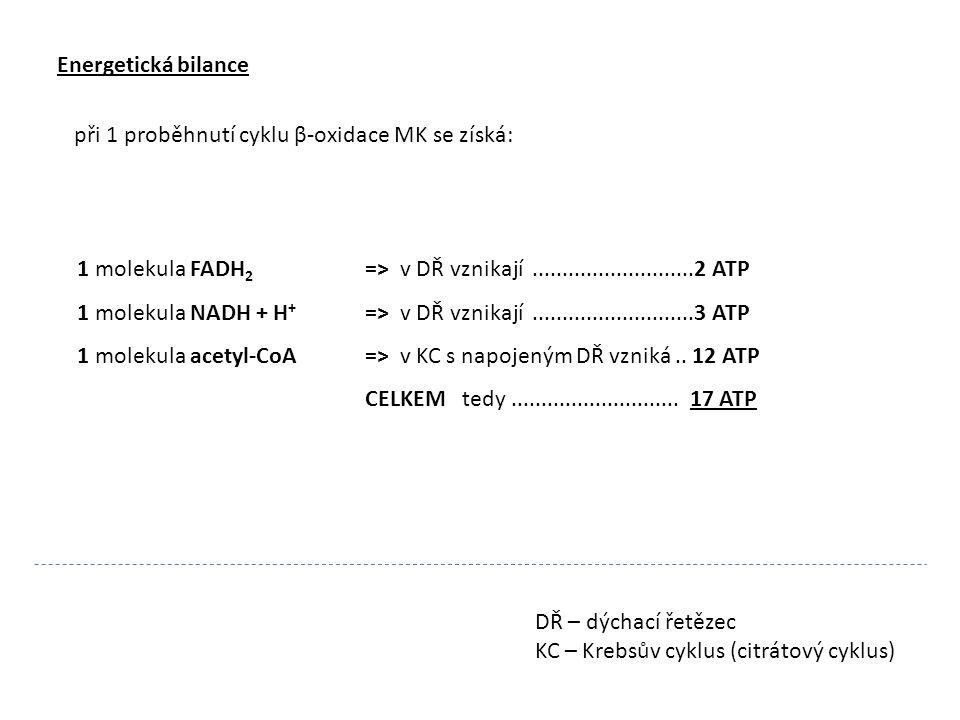 Energetická bilance při 1 proběhnutí cyklu β-oxidace MK se získá: 1 molekula FADH2 => v DŘ vznikají ...........................2 ATP.