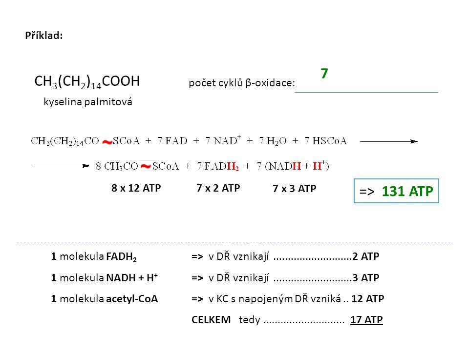 7 CH3(CH2)14COOH => 131 ATP Příklad: počet cyklů β-oxidace:
