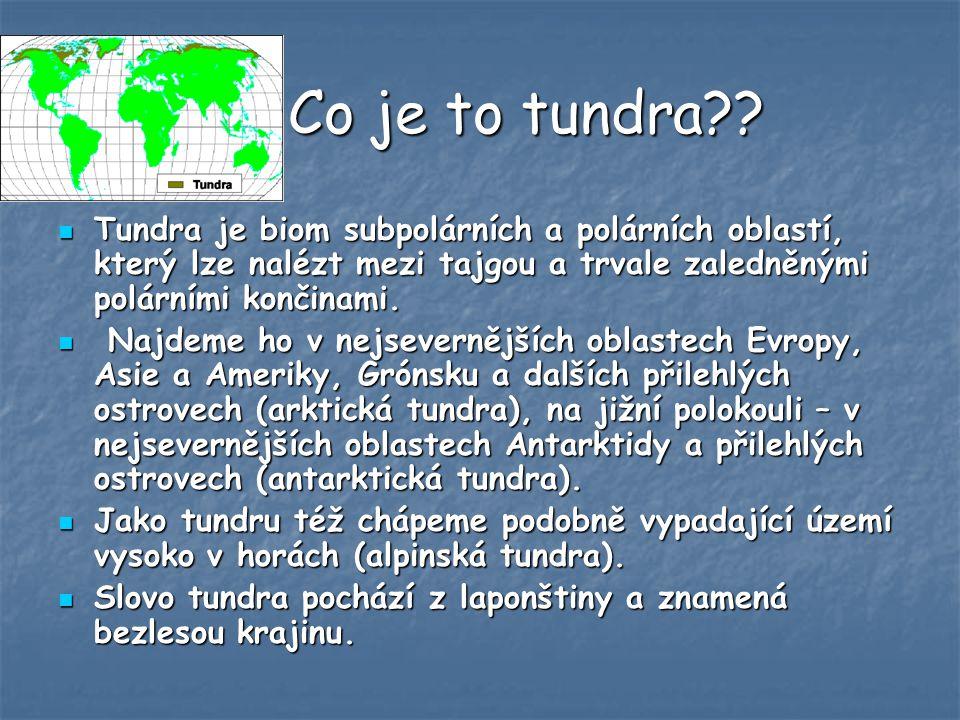 Co je to tundra Tundra je biom subpolárních a polárních oblastí, který lze nalézt mezi tajgou a trvale zaledněnými polárními končinami.