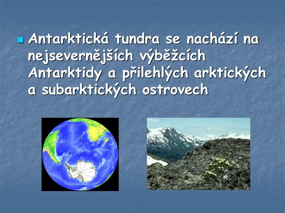 Antarktická tundra se nachází na nejsevernějších výběžcích Antarktidy a přilehlých arktických a subarktických ostrovech