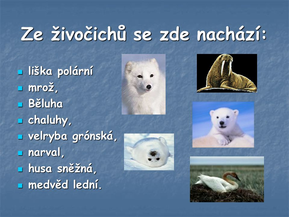 Ze živočichů se zde nachází:
