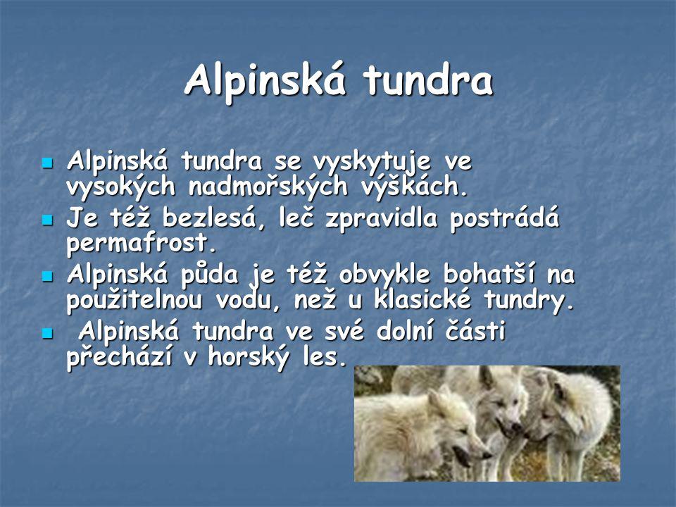 Alpinská tundra Alpinská tundra se vyskytuje ve vysokých nadmořských výškách. Je též bezlesá, leč zpravidla postrádá permafrost.