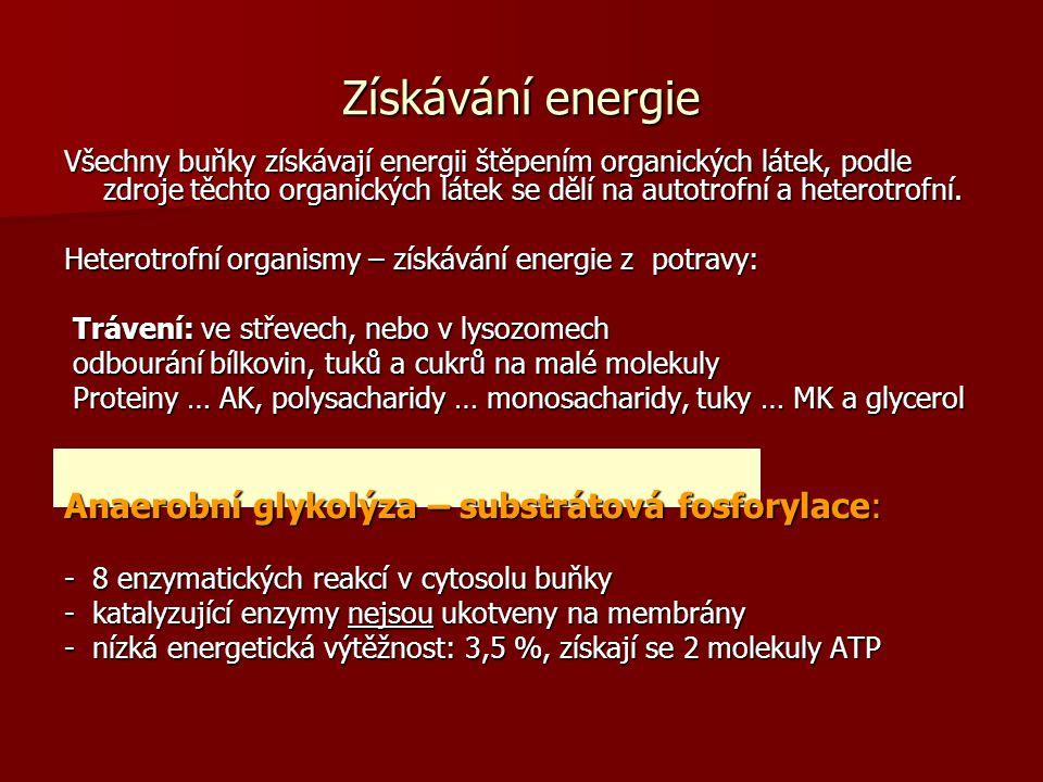 Získávání energie Anaerobní glykolýza – substrátová fosforylace: