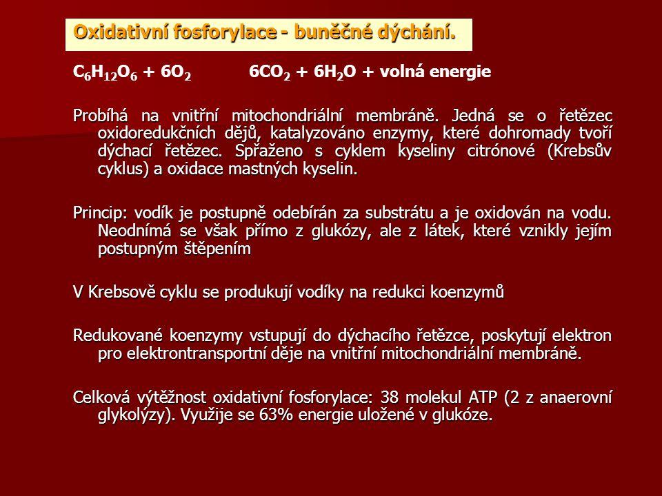 Oxidativní fosforylace - buněčné dýchání.